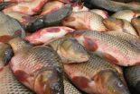 خداحافظی با ماهی شب عید | رشد ۲ برابری قیمت ماهی